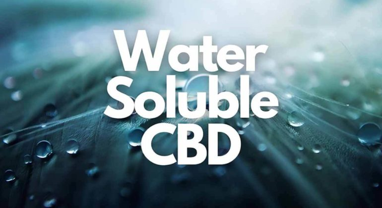 Water Soluble CBD and bioavailability